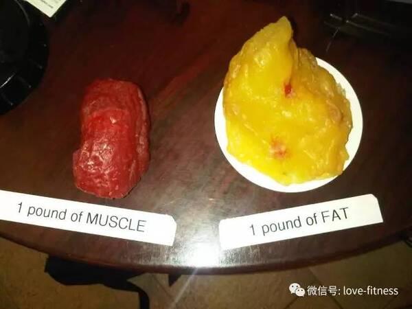2公斤脂肪 vs 2公斤肌肉