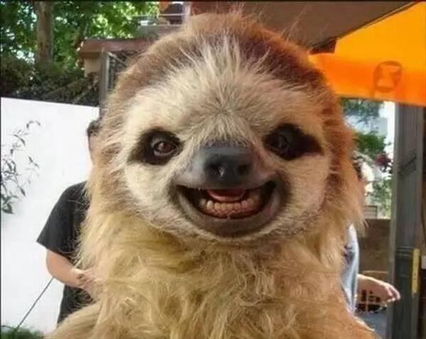"""笑哭了!动物自拍也""""疯狂""""看看谁的牙齿最漂亮!"""