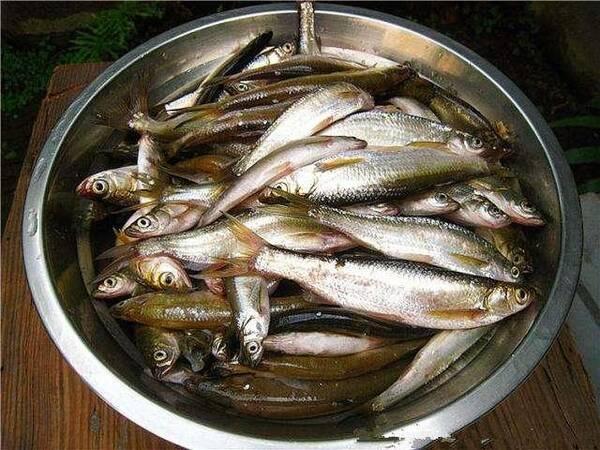 鱼白高血压能吃吗_对于想要减肥,高血压,高血脂,糖尿病等\