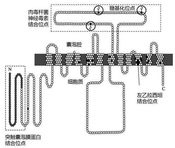 铁酰亚胺结构图
