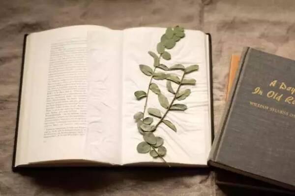 在书中平摊一张纸巾,把选好的植物平放在纸巾上.