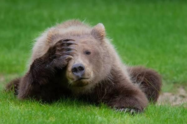 2018最搞笑野生动物照片出炉,第一张照片就笑哭了