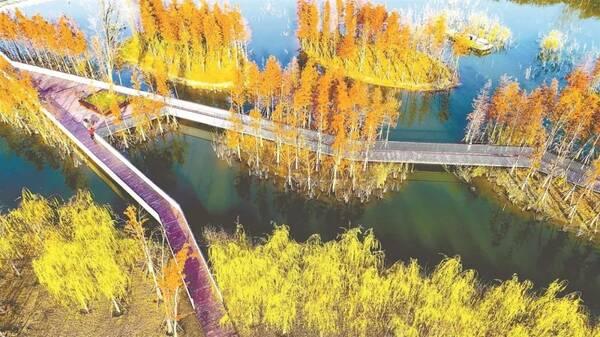 壁纸风景山水枫叶