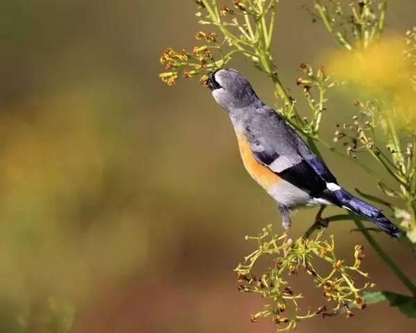瓦屋山竟然有这么多鸟!快看看你认识哪些?