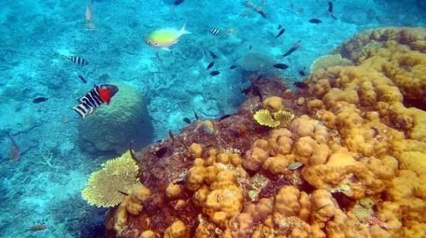 33个绝赞海岛攻略 去旅游潜水吧!
