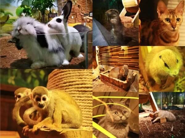 """""""超萌""""未来动物城来了,50余种珍稀动物,近2000㎡室内动物园等你带娃来"""