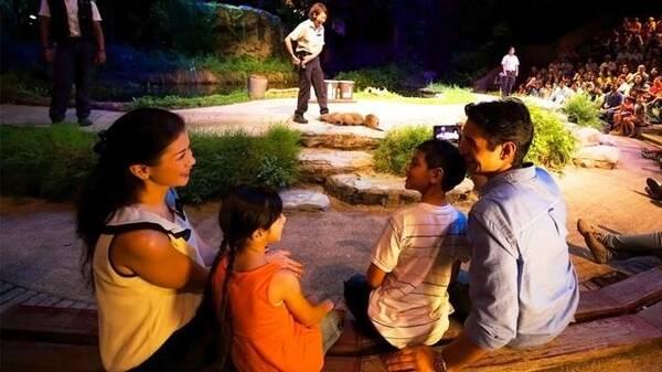 新加坡夜间野生动物园就是另一个广受欢迎的热门夜间好去处,这个特别