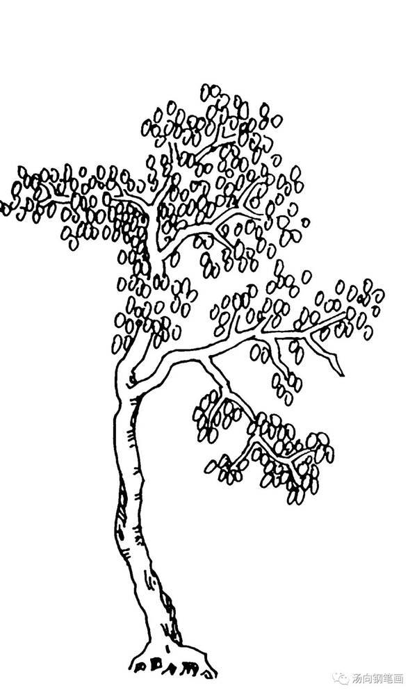 学钢笔画279树组合三…不同植物巧搭配