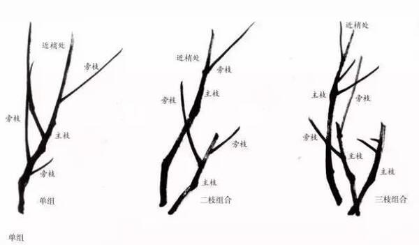 梅花花朵的画法 梅花有多种表现手法,最常见的为双勾和没骨的画法.图片