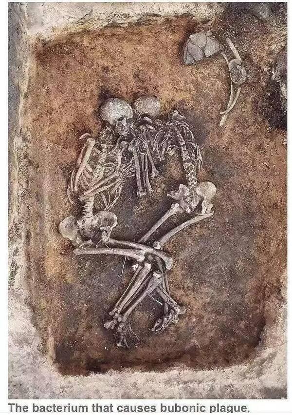 04俄考古学家为中世纪导致鼠疫的细菌耶尔森氏菌添新证据图片