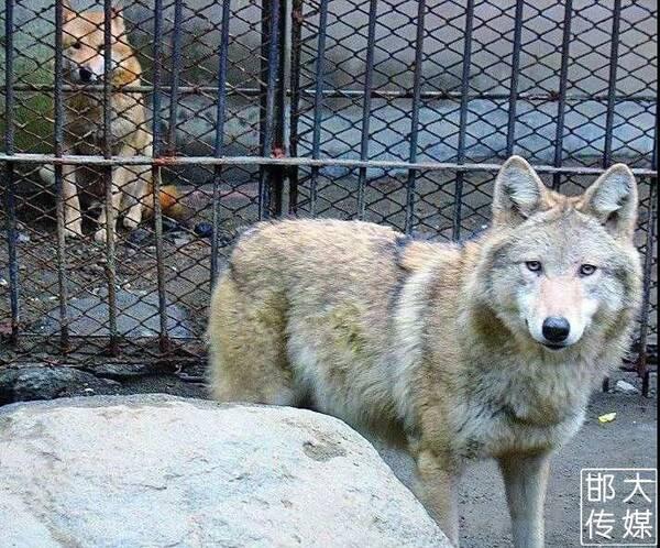 邯郸佛山野生动物园逆天了,提前探营带你先