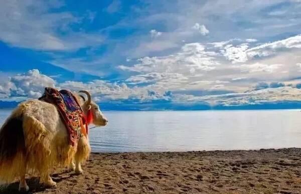 在拉萨,心都变得纯净了,面对虔诚的朝拜者,看着藏族老人安详的面庞