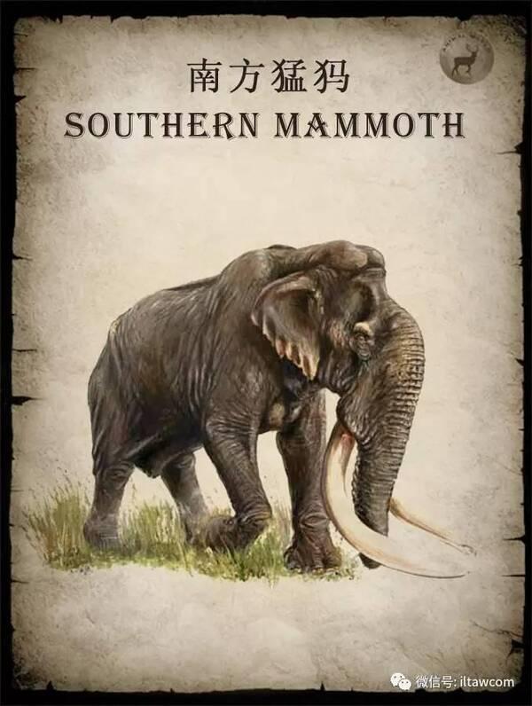 动物世界-猛犸象