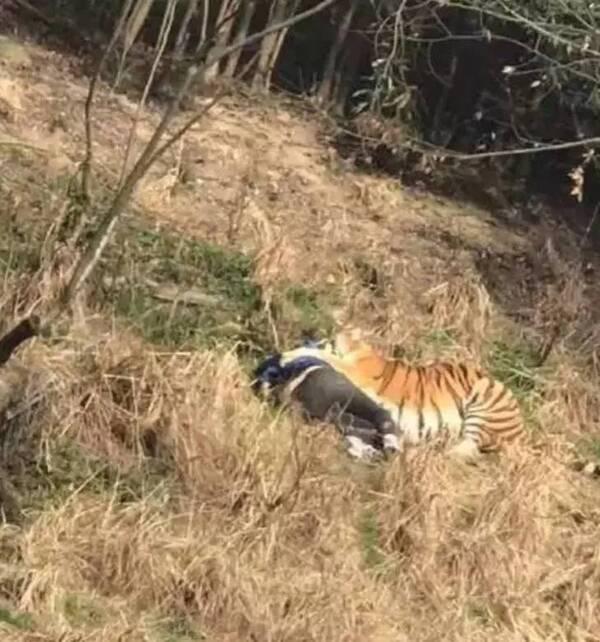 """雅戈尔动物园的张姓负责人透露: """"伤者是一名成年男子,他的老婆,孩子"""