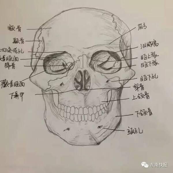 福州女大学生手绘人体解剖图太逼真!