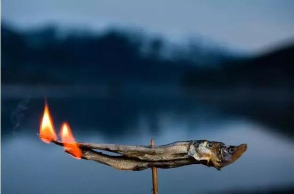 从点燃小鱼干,海鸟到狮子,河马和鲸鱼,人类用过多少
