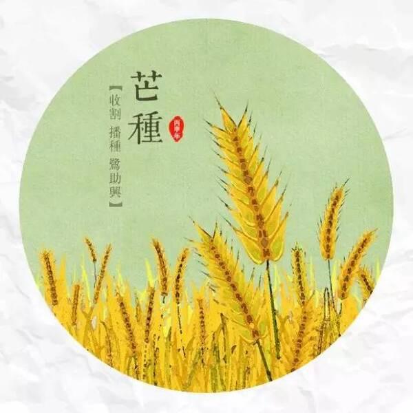 今日芒种——非遗节气:泽草所生,种之芒种
