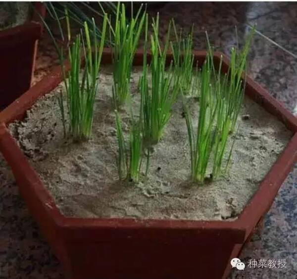 绿豆种植步骤图片欣赏