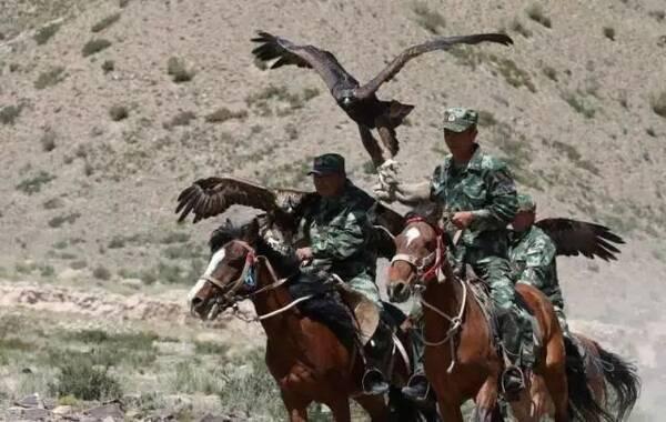 猎鹰巡逻队 关于护边员的任务,胡东亮称,由于边防派出所的工作人员数量有限,就组织了一批当地居民组成巡逻队,他们主要负责到指定的位置巡逻,并用单位派发的手机拍照或者发送位置汇报情况。 据教导员胡东亮介绍,当地233名护边员组成了三支猎鹰巡逻队,并非每个护边员都有猎鹰,每支巡逻队的猎鹰数量是三到四只。这些猎鹰都是护边员个人驯养的,巡逻的护边员会带着猎鹰一起出去。在距离相对较远时,猎鹰可以及时发现情况并发出警告。 胡东亮说,猎鹰对于护边员来说,不仅仅是帮助他们发现险情,更深层面上,猎鹰是护边员的精