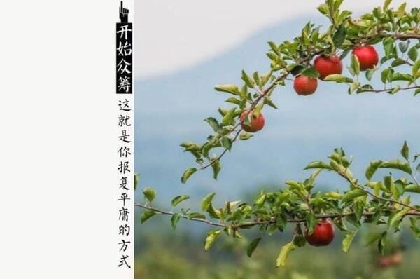 四季梦_纳凉,在树下吃果子的季节. 六月枇杷,七月梨