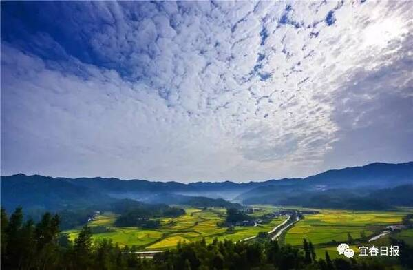 CCTV13《新闻直播间》:金黄的稻束,唯美的秋