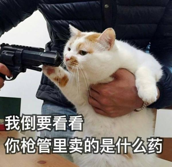 """直到前几天,一只叫""""楼楼""""的网红猫去世,很多人类才把表情包里那只被图片"""