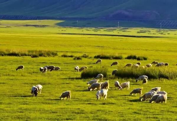 内蒙古12盟市代表歌曲,快看你的家乡是哪首歌!