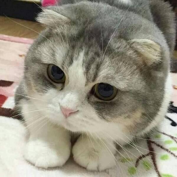 这只可爱的猫咪告诉你,男生拍照和女生大不同,这差别