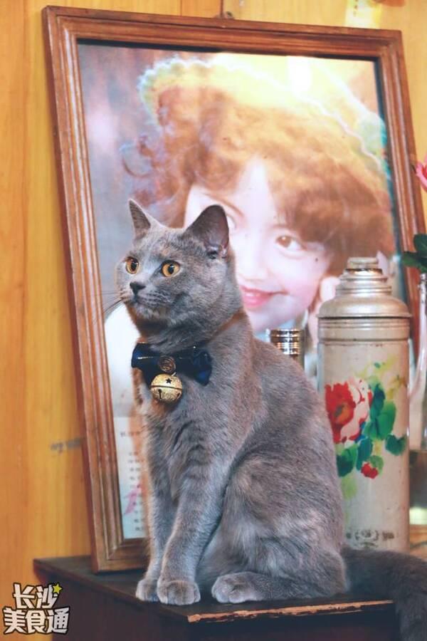 一个喜欢猫的男人_一个男人一只猫还有他的咖啡酒馆!