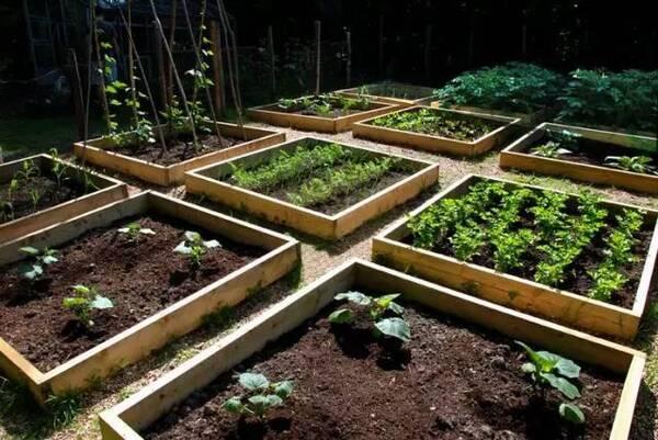 花园种菜,4步教你打造美美的院子!