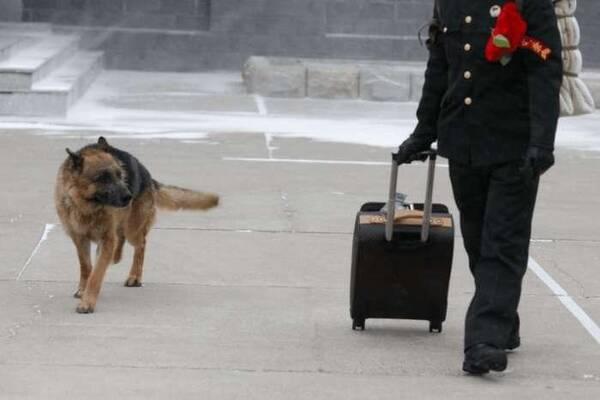 军犬哭囹�a��(�-c_当训练员要退役的时候, 军犬哭的像个孩子一样!