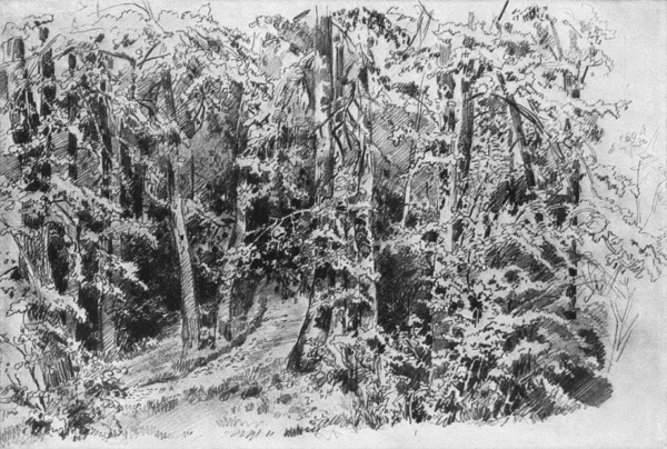 俄国现实主义风景画奠基人:希施金的油画和素描