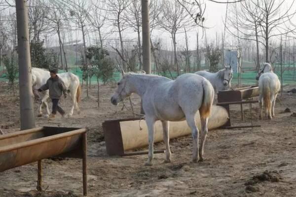 濮阳市东北庄野生动物园来了新动物,快看都