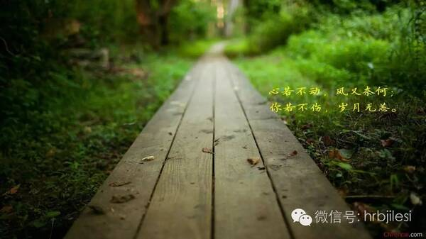 【感悟人生】尝遍人生百味,生命方呈异彩