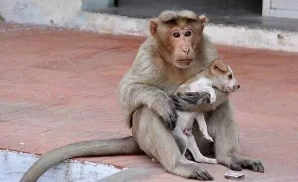 一只流浪小狗受到欺负 被一只见义勇为的猴纸救了 猴子把狗狗当成自己