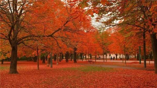 枫树,槭树,桦树,鹅掌松,落叶松等渐次经霜,美到窒息.