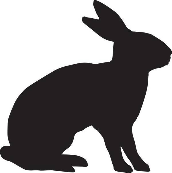 衣柜衣服堆成山还是没衣服穿的属兔女图片
