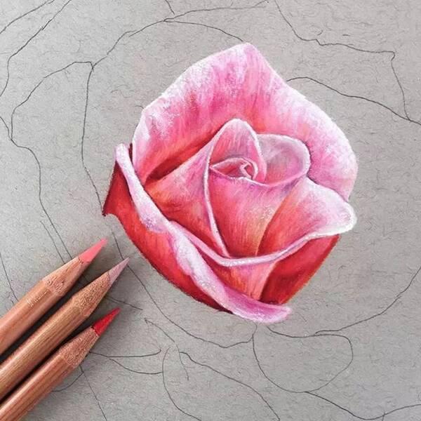 ▽ 彩铅下的玫瑰花 栩栩如生 /// 今天的分享就到这里了 喜欢的话给