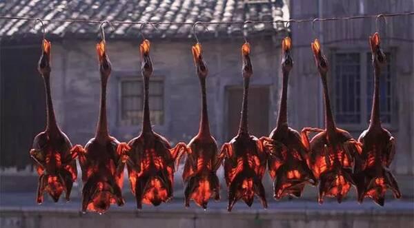 听说银川吃到正宗的老上海酱鸭了2岁宝宝吃鸭血呕吐图片