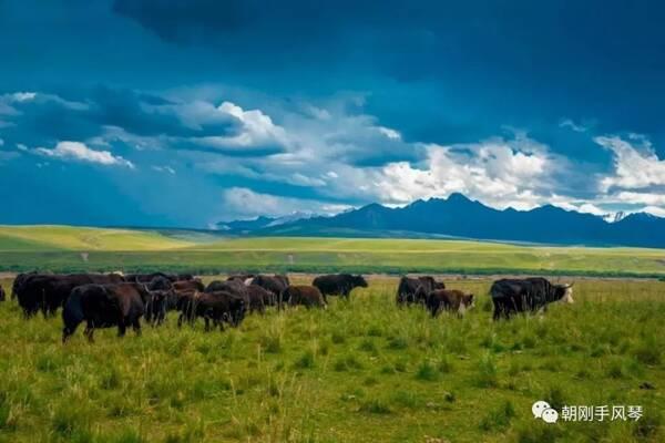 一副大自然的画卷——杨屹《草原牧歌》欣赏