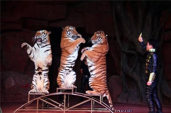 动物保护组织反对马戏团动物表演的主要原因是流动演出过程中野生动物