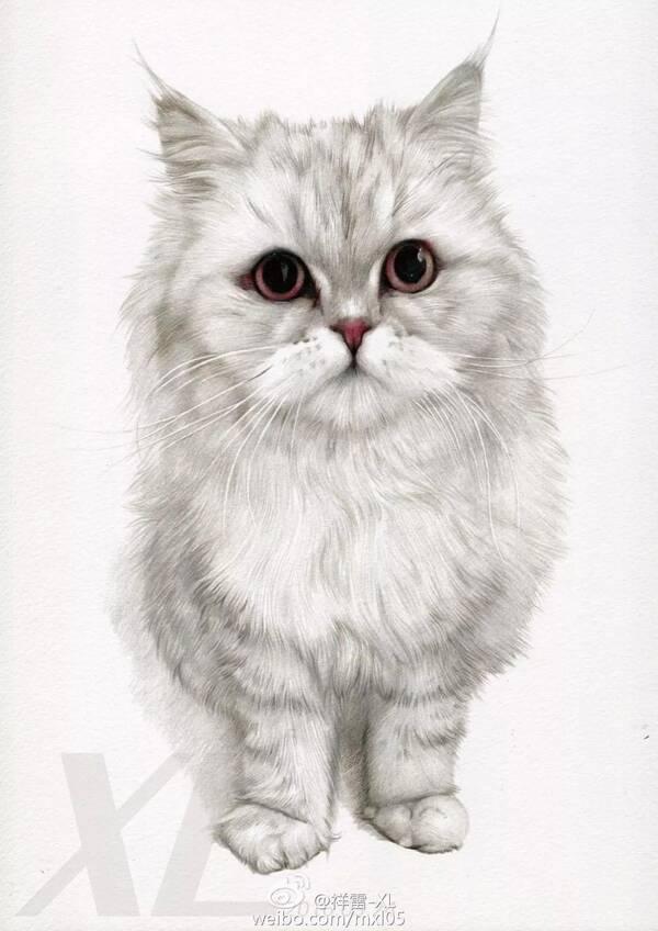 猫咪亮亮的眼晴彩铅画步骤图