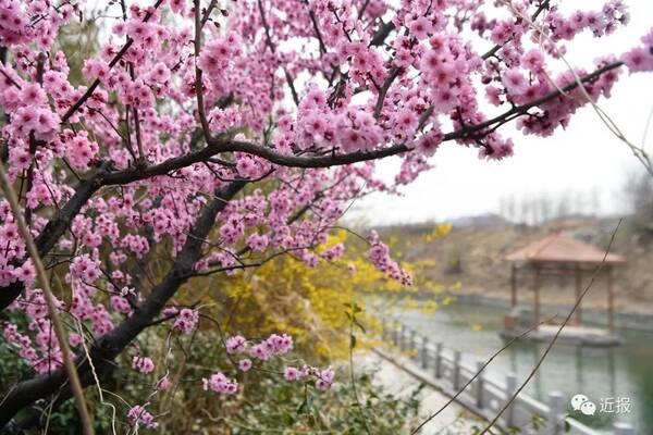 4月14日,在济南桃花岛旅游度假区,让我们共同种下希望之树,徜徉在