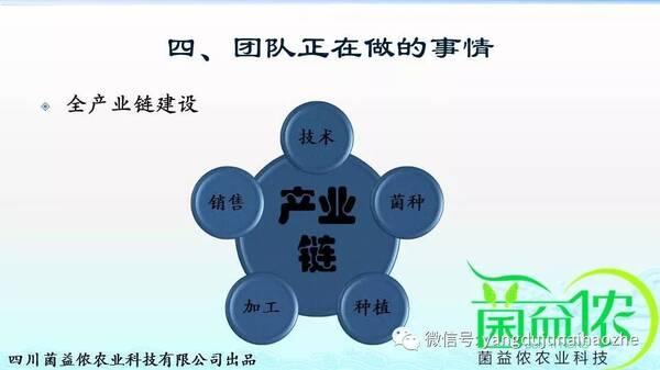 张亚:羊肚菌消费市场的变化对羊肚菌产业结构的影响