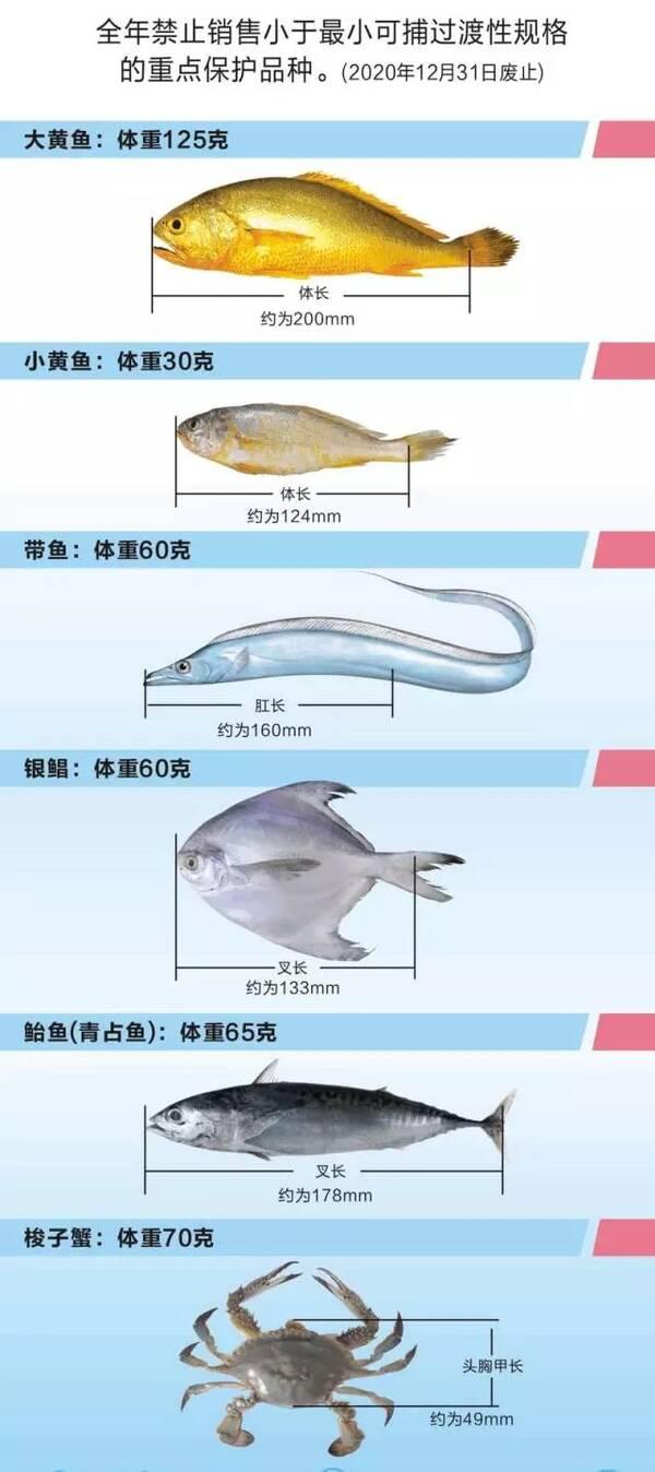 10个产卵场保护区 大戢洋,马鞍列岛,岱衢洋,舟山渔场,韭山列岛,渔山