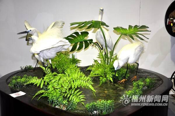 第四届中国动物标本大赛首次在福州举办 257件作品