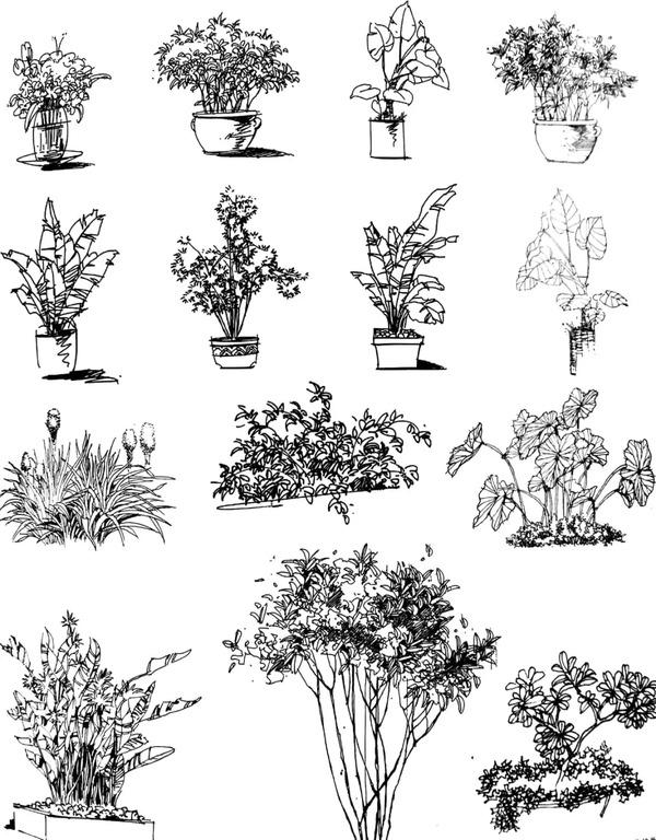草本植物与木本植物最直接的区分就是木本的芯是硬的,草本植物的茎是