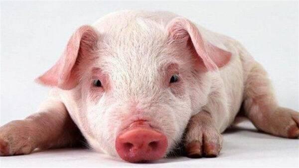 酸菜上不同答案的章,出乎有区别?猪肉到底颜色甜肉图片