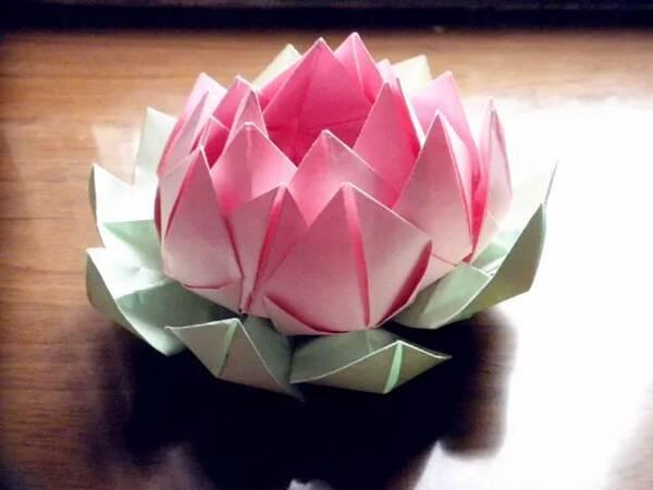 讲解睡莲,观察后绿色使者老师指导参加活动的同学们手工折纸一朵睡莲.