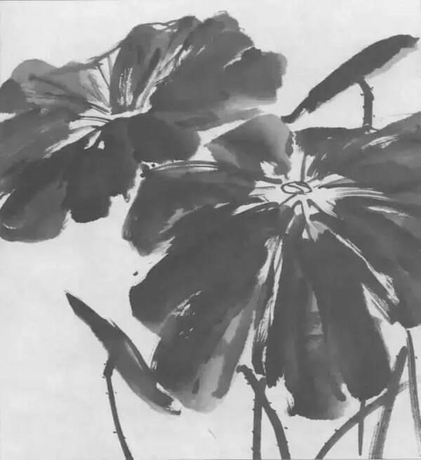 画莲花的方法步骤